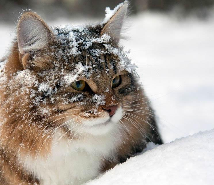 Winter Tips For Your Pets