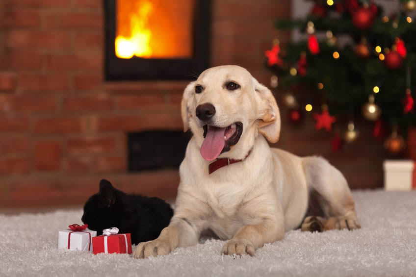 Christmas Tips For Your Pets