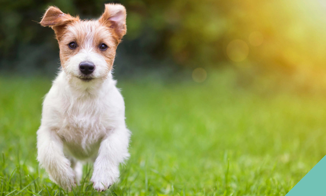 Protect your pet against Kennel Cough